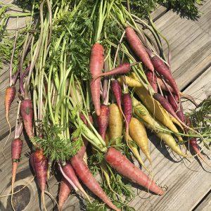 Zanahoria arcoiris